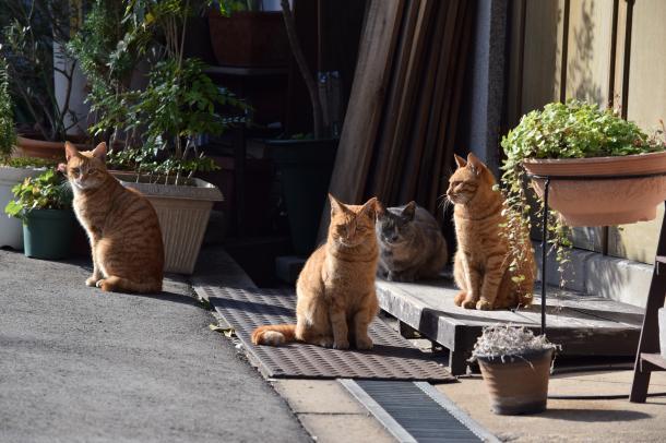 猫37,38,39,40