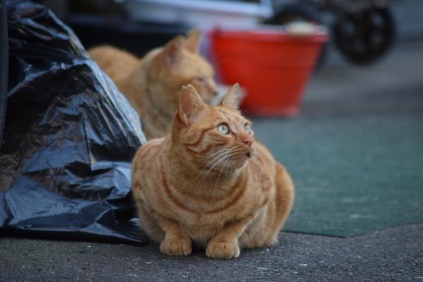 猫27,28
