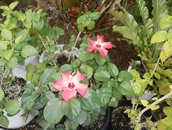 温室の花5