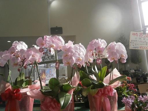 温室の花1