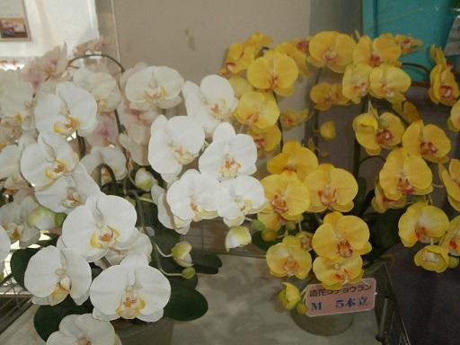 温室の花4
