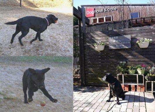 20160113 P1120322 POP DOG
