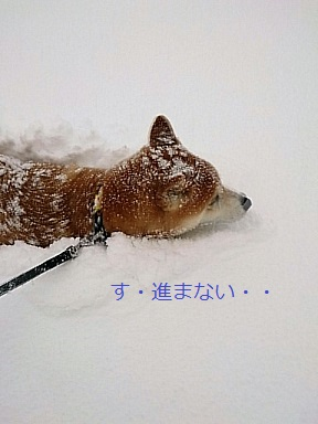 虎鉄ちゃーん、がんばって!!