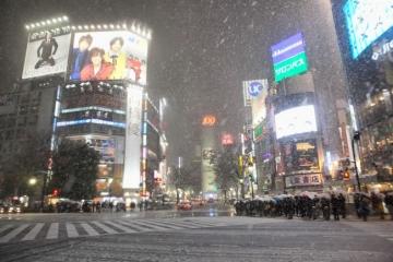 Tokyo-Slammed-With-Historic-Snowfall-650x433.jpg