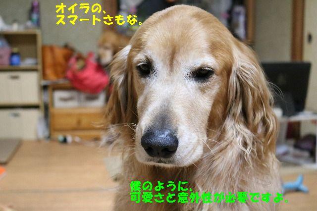 IMG_1998_20151214205305ae5.jpg