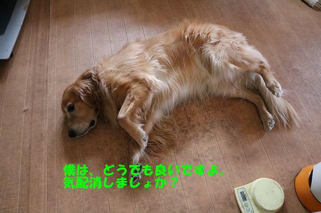 IMG_2479_20151219230301cd6.jpg