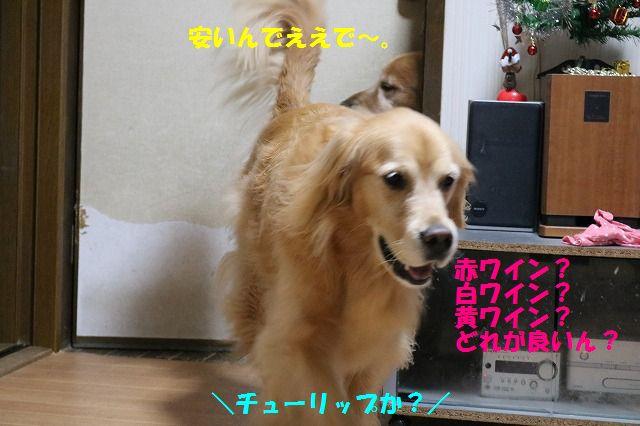 IMG_2859.jpg