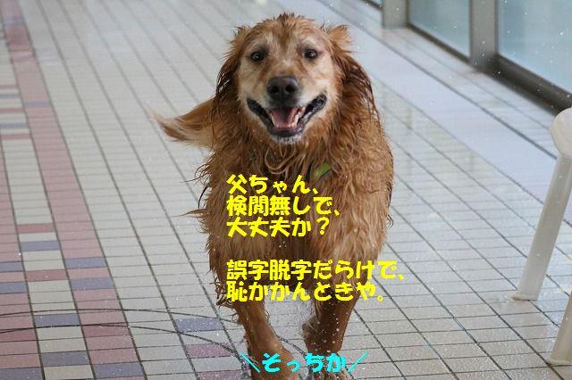 IMG_3500_20151228224002e8f.jpg