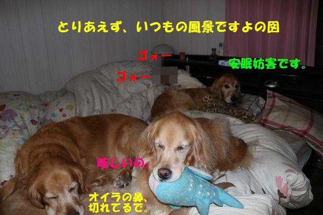 IMG_5674.jpg