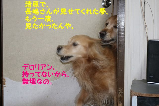 IMG_6948_20160203220129c08.jpg