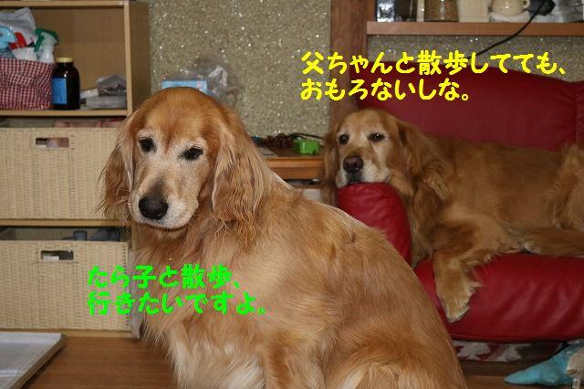IMG_7113_2016020522400636b.jpg