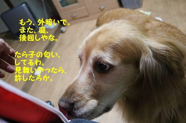 IMG_7739.jpg