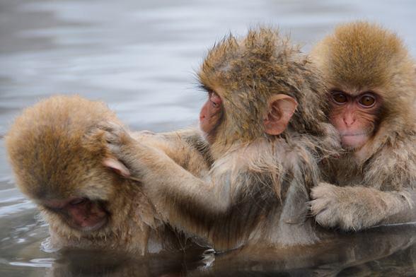 カンパニー三猿