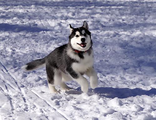 雪って楽しいね(^^♪