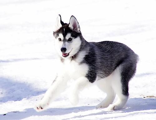 雪って楽しい♪
