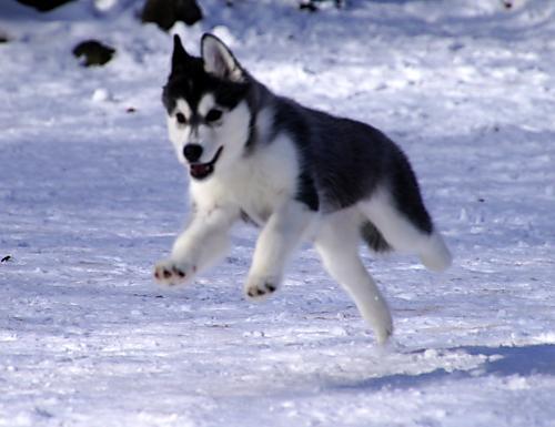 雪上でも跳ぶ!