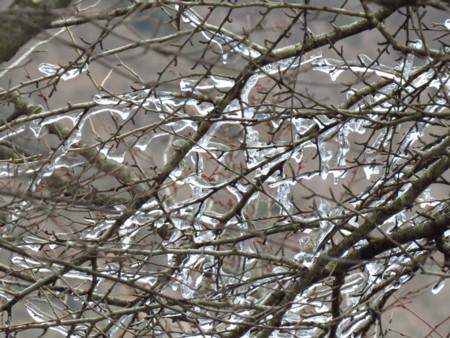 金時雨氷2160211