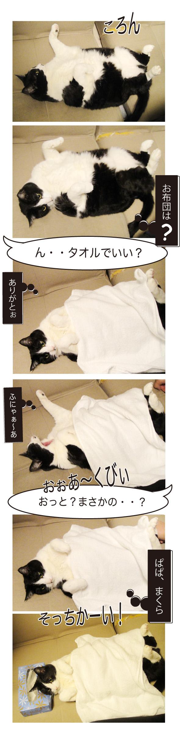 お布団をかける猫