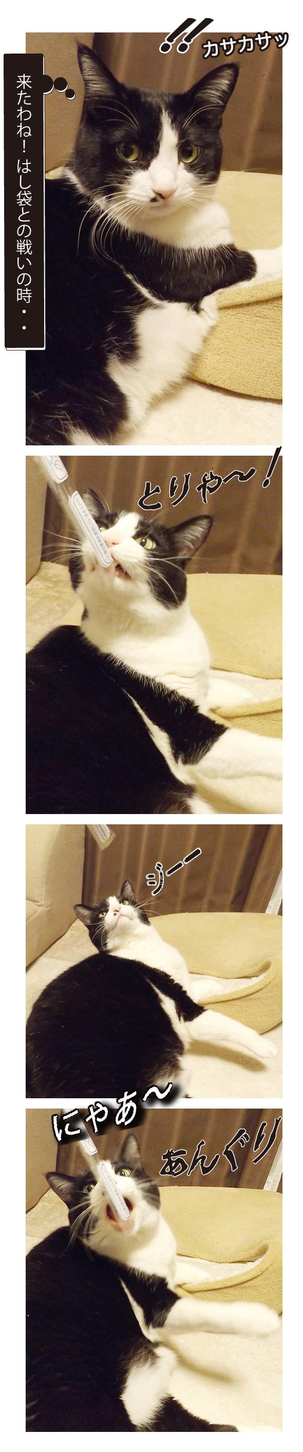 はし袋と遊ぶ猫