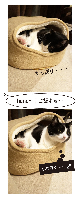 猫のかまくら