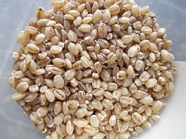 Ichibanboshi hulless barley 20160109