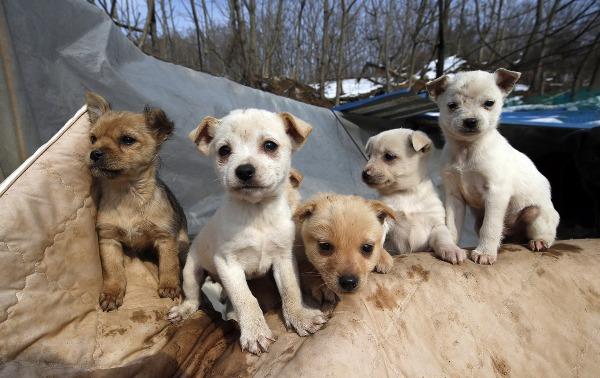 Skdogs3.jpg