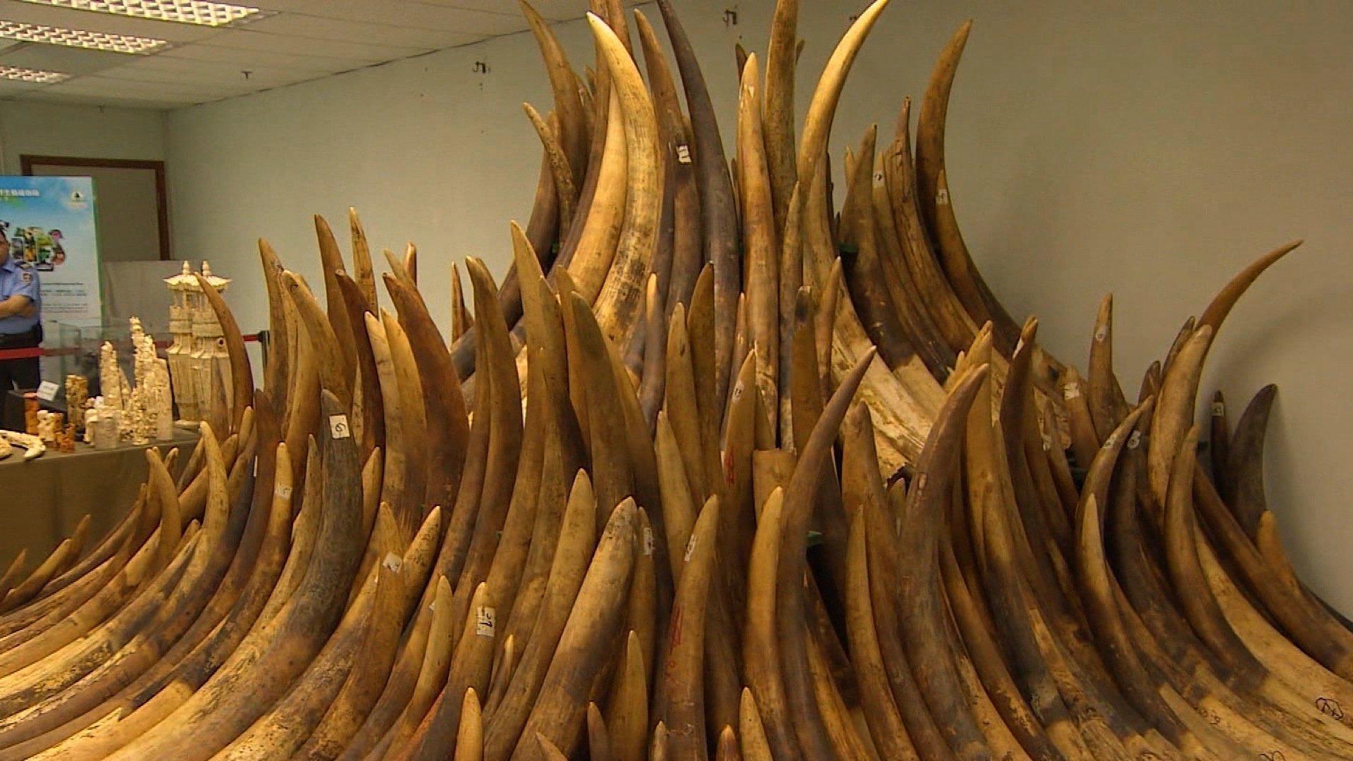 ivory-ban-hong-kong-cnn.jpg