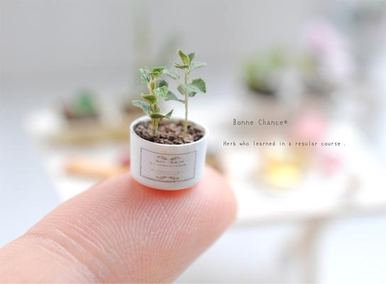 植物 大きさ