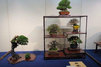 国172小品盆栽
