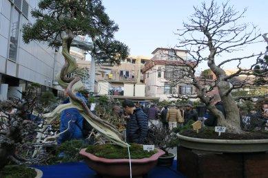 立春盆栽大市の光景1