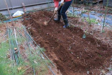 鶏糞施肥後の畝立