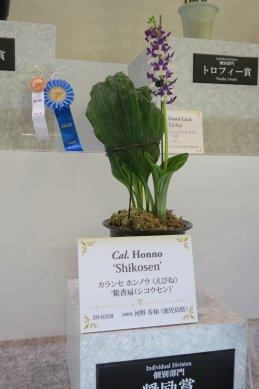 奨励賞カランセ ホンノウ(えびね)