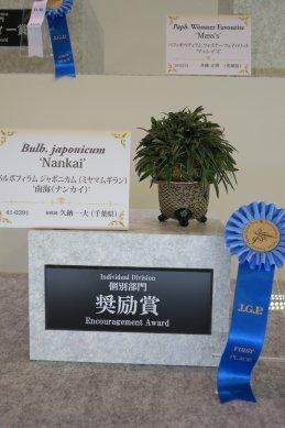 奨励賞バルボフィラム ジャポニカ(ミヤマムギラン)