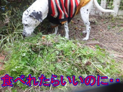 2016_0117_122059.jpg