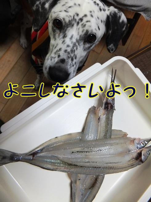 blog0124_09442.jpg