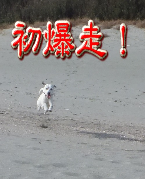 blog_0102_110313(3).jpg