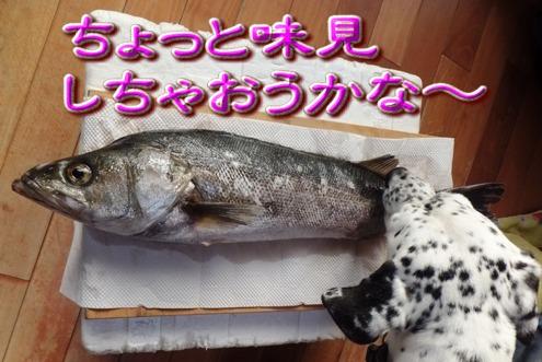 blog_1205_151424.jpg