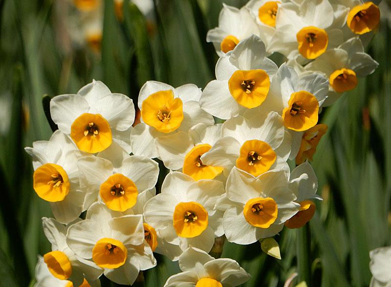 160104花の国1