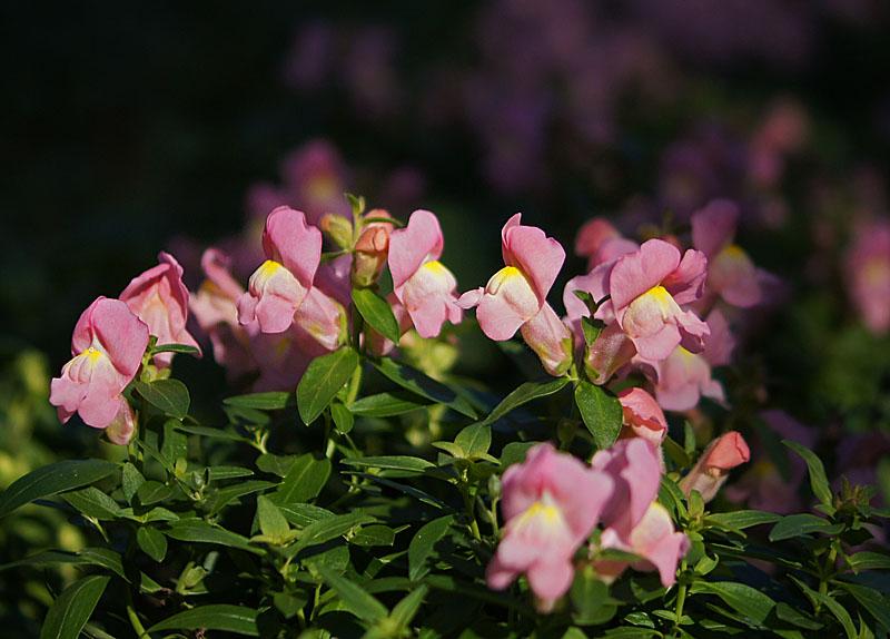 160104花の国2