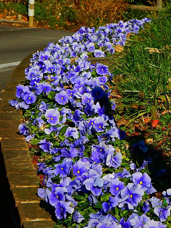 160104花の国4