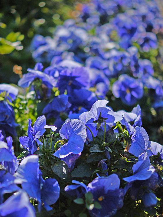 160104花の国5