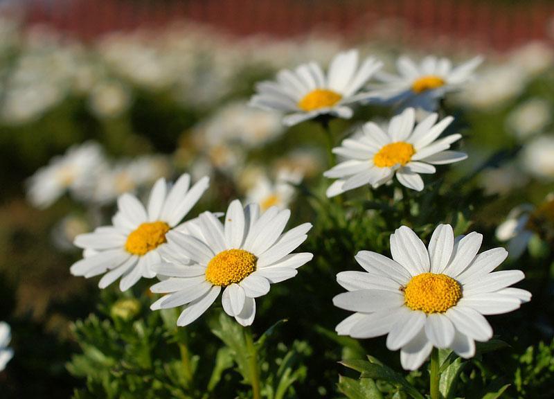 160104花の国6