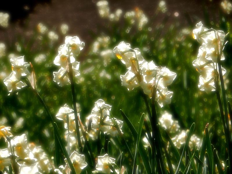 160104花の国7