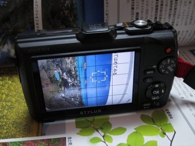 IMG_6520-1.jpg