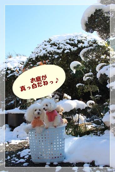 お庭が真っ白