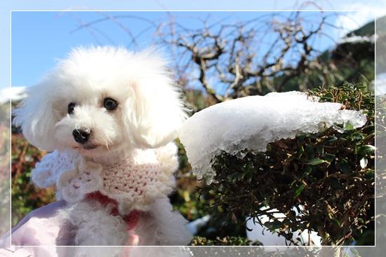 青空と雪と茉莉花