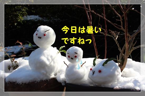 雪ダルマたち♪