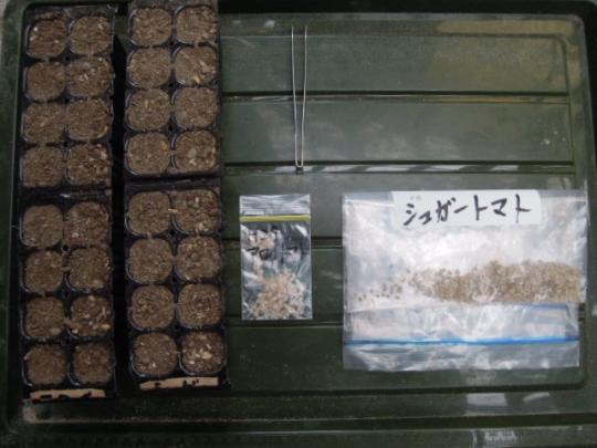 アロイトマト 種蒔き H2802