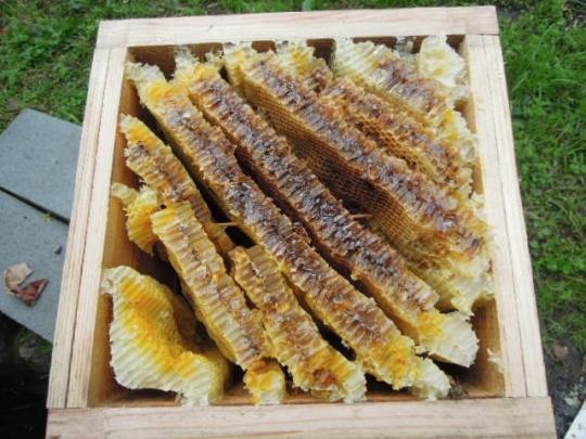 日本蜜蜂01 壊滅 採蜜 H2712