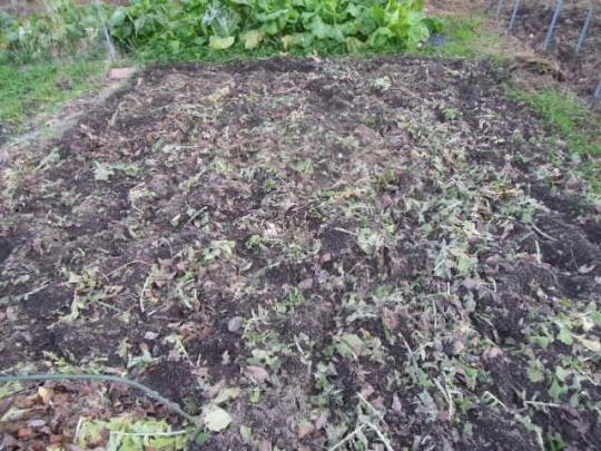 土作り 落ち葉 鶏糞 H2712